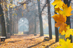 Autumn Colonade. With Gateway in the Cemetery Stock Images