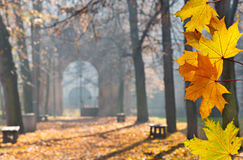 Autumn colonade with a gateway. And yellow blades Royalty Free Stock Image