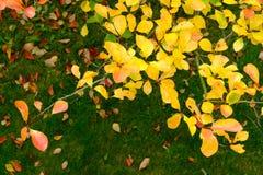 Autumn Color Fotos de Stock Royalty Free