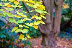 Autumn Color Imagens de Stock Royalty Free
