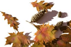 Autumn color. Autumn royalty free stock image