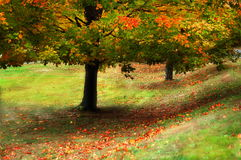 Autumn Color. Autumn tree with colorful leaves fallen to ground Royalty Free Stock Photography