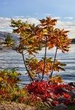 Autumn Color foto de archivo