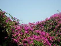 Autumn Color Images libres de droits