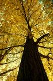 Autumn Color Royalty-vrije Stock Fotografie