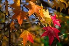 Autumn Color Fotografia de Stock Royalty Free