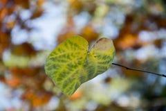 Autumn Color Imagens de Stock