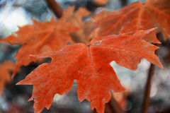 Autumn Color Foto de Stock Royalty Free