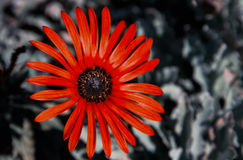 Autumn Color Imagem de Stock