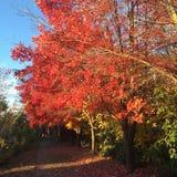 Autumn Color Immagine Stock