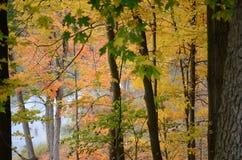 Autumn Color Stock Foto's