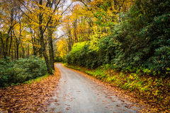 Autumn color along a dirt road near the Blue Ridge Parkway in Mo Royalty Free Stock Image