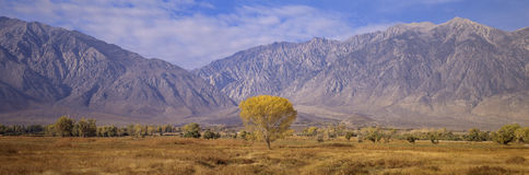 Autumn color along Highway 395, Stock Photography