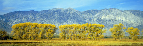 Autumn color along Highway 395, Royalty Free Stock Photography