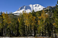 Autumn color on Aspens, Lassen Peak, Lassen Volcanic National Park Stock Photography