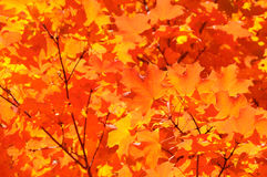 Autumn Color Background Royalty Free Stock Image