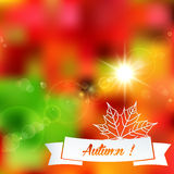 Autumn color background leaf illustration Stock Photos