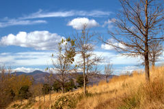 Autumn color and bare trees with mountains and blue sky with clouds royalty free stock photos