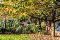 Autumn Color in Birmingham Stockfoto