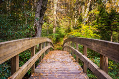 Autumn color and bridge on the Tanawha Trail, along the Blue Rid. Ge Parkway, North Carolina Royalty Free Stock Image