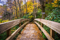 Autumn color and bridge on the Tanawha Trail, along the Blue Rid Stock Images