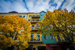 Autumn color and buildings along Dunckerstraße Stock Images