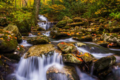 Autumn color and cascades on Stoney Fork, near the Blue Ridge Pa Stock Image