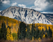 Autumn Color In Colorado. Granite mountains offset by the changing color of the yellow aspen trees. On Kebler Pass, Coloardo stock images