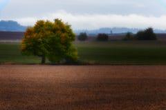 Autumn Color começa a girar as folhas fotografia de stock royalty free