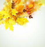 Autumn color composition Stock Photography