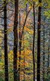 Autumn Color dans la forêt Images libres de droits