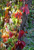 Autumn color decorative leaves. Palette of fall. Royalty Free Stock Image