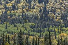Autumn Color in einem Mischwald Lizenzfreie Stockfotos