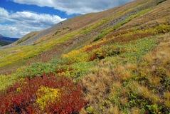 Autumn Color, escala de Sawatch, Rocky Mountains Imagem de Stock Royalty Free