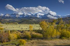 Autumn color of Fall view of hay bales and trees in fields with snow capped San Juan Mountains of Dallas Divide Ridgway Colorado. Autumn color of Fall view of stock image