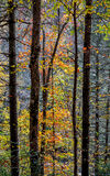 Autumn Color in Forest Royalty Free Stock Images
