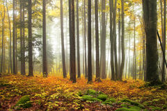 Autumn color forest Stock Photography