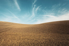Autumn color grass and blue sky Stock Photography