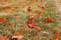 Autumn color on the grass and leaves Stock Photos