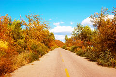 Autumn color highway Royalty Free Stock Images