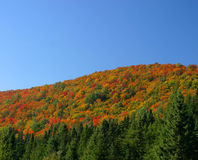 Autumn color hill and trees. Colored tress on a hill season autumn Stock Images