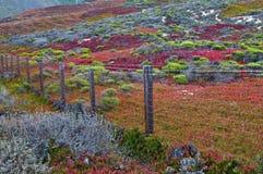 Autumn Color i kust- Kalifornien Arkivbild