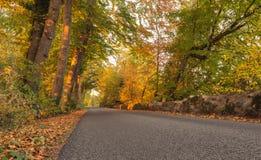 Autumn Color i skog Arkivfoton