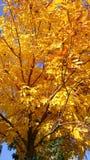 Autumn color Stock Image