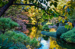 Autumn Color in Japanese Garden Stock Image
