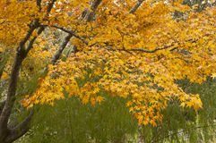 Autumn color Royalty Free Stock Photography
