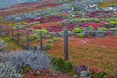 Autumn Color in Küsten-Kalifornien stockfotografie