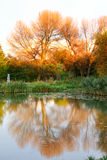 Autumn Color Lake. Reflexions of color trees in lake in the autumn Royalty Free Stock Photography