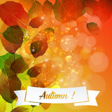 Autumn color leaf illustration Stock Images