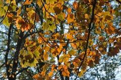 Autumn, color leaf Stock Photos